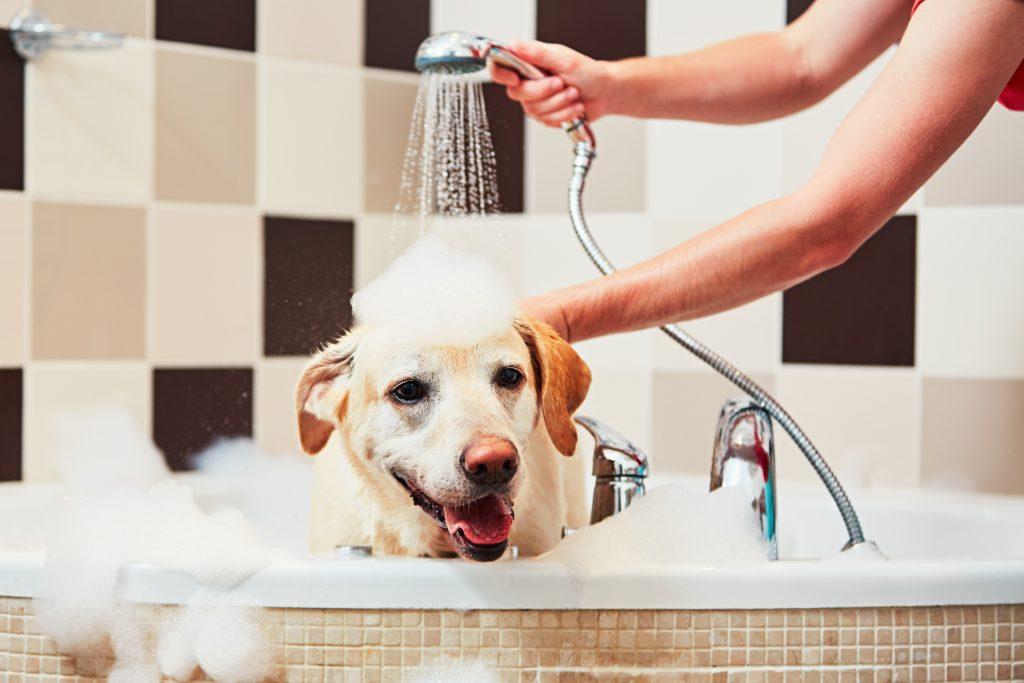 Bad og Prosjekt - Bad eller dusj
